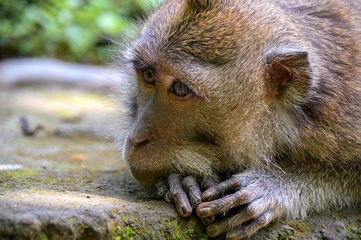 Bali, Indonesia, Travel, Ubud, Monkey Forest, Monkey