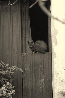 Black And White, Cat, Door, Plasencia