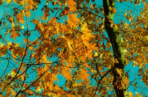 Branch, Bright, Change, Color, Environment, Fall, Flora