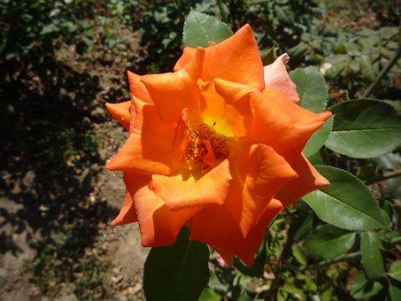 Nature, Flower, Grew, Summer, Smell, Nice