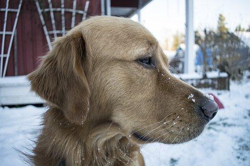 Puppy, Frozen, Cold, Fun, Park, Mammal, Winter, Outdoor