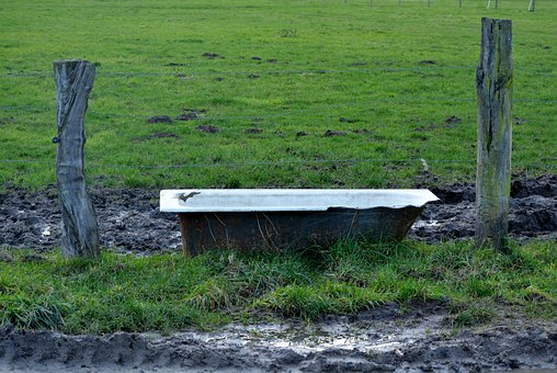 Meadow, Drinking Trough, Nature