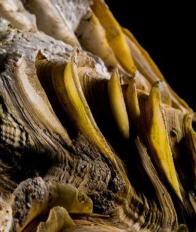 Shell, Limescale, Close