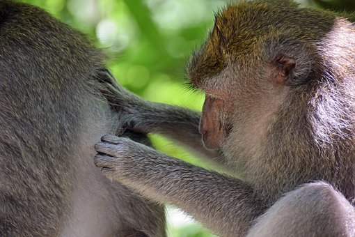 Bali, Indonesia, Travel, Ubud, Monkey Forest, Ape