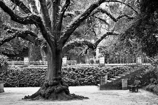 Tree, Black And White, Park, Coimbra, Nature