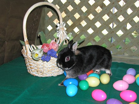 Easter, Bunny, Eggs, Spring, Colors, Black, Flowers