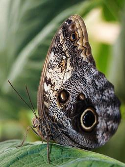 Butterfly, Wings, Butterfly Wings, Insect