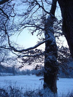 Tree, Evening, Winter, Snow, Dusk, Sonnenunetrgang