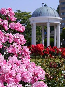 Verny Park, France, Rose, Pink, Red, Sea, Naval Base