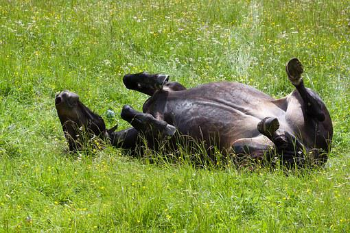 Horse, Pasture, Meadow, Rolling, Feel At Home, Happy