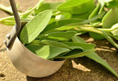 Sage, Herbs, Culinary Herbs, Healthy, Tea Herbs, Health