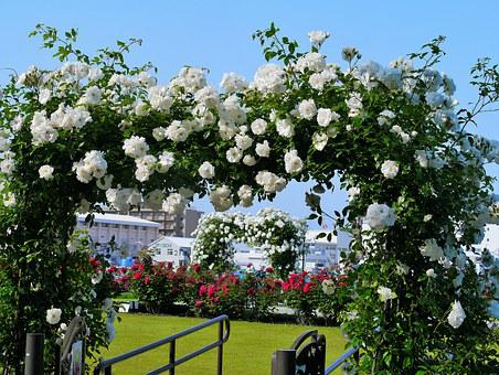 Verny Park, France, Rose, White, Arch, Red, Sea