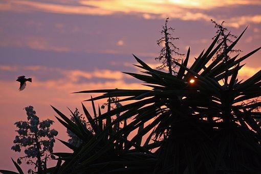 Sunset, Landscape, Birds, Sky, Sundown, Shadow, Cloud