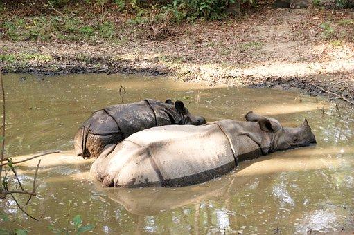 Rhino, Chitwan, Nepal, National Park