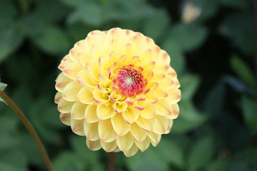 Country Garden Show, Flower, Close, Eutin
