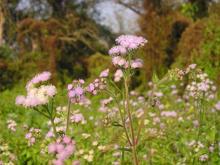 Nepal, Flower, National Park, Chitwan