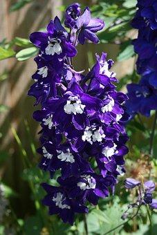 Flower, Deep, Purple, Attractive, Stunning, Garden