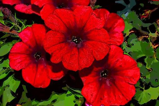 Surfinia, Red Surfinia, Flowers