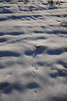 Snow, Winter, Footprints, Animals, Go, Bed