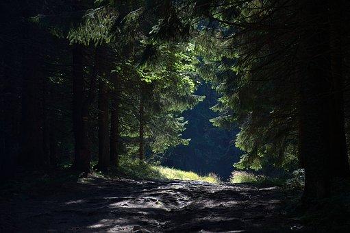 Forest, Way, Mountains, Radziejowa, Beskids, Poland