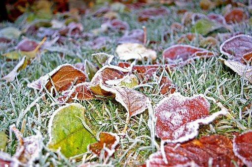 Rush, Lawn Frosty, Meadow, Winter, Frosty, Halme, Grass