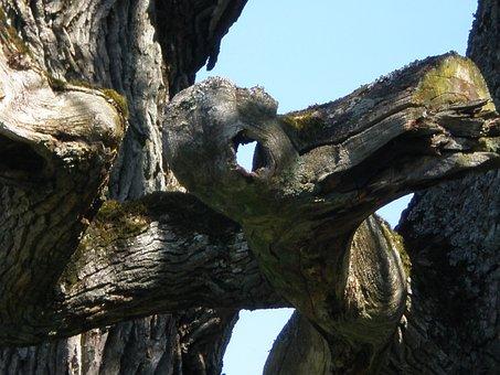 Oak, Tree Face, Hantu Ghost, Mythical Creatures, Eye