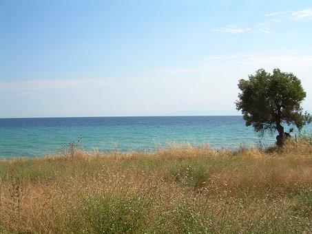 Nea Skioni, Chalkidiki, Greece, Meadow, Sea, Water