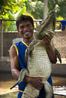 Crocodile, Alligator, Zoo, Circus, Predator, Dangerous