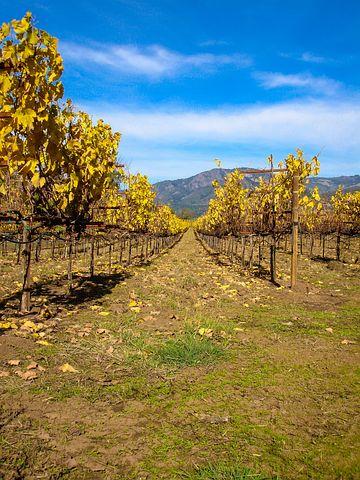 California, Usa, America, West, United States, Wine
