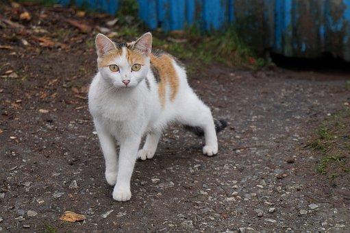 Beautiful, Cheerful, Cat, Animal, Pet, Village, Land