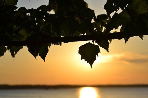 Sunset, Lake, Deciduous Tree, Summer, Näsijärvi