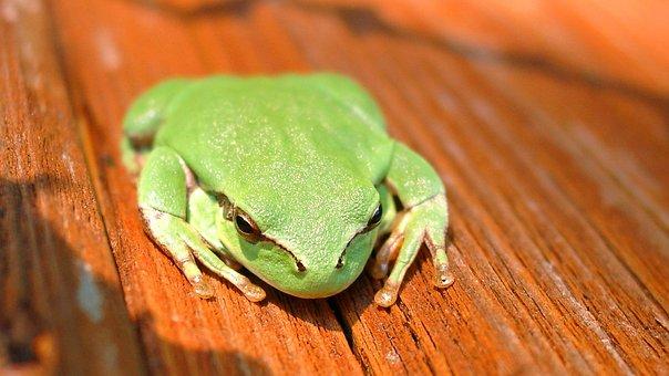 Gerardo, Frog, France, Rennet