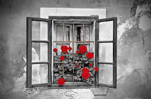 Window, House, Black And White, Flowers, Colorkey