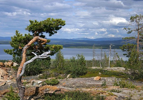 Views, Pine, ånnsjön, Mountain, Lake, Water, Green