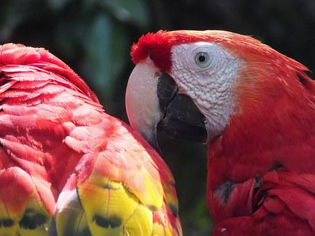 Parrot, Ara, Mexico, Beak, Bird