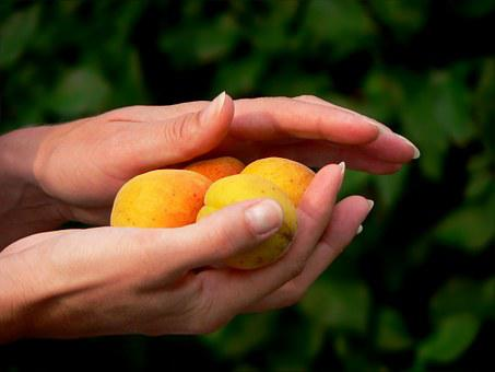 Hand, Fruit, Peaches, Gift