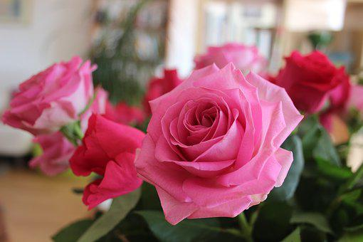 Roses, Flowers, Bouquet, Pink Flowers, Love, Interior