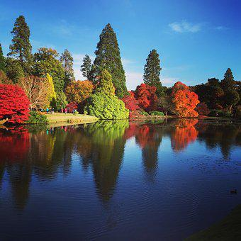 Autumn, Fall, Nature, Season, Forest, Outdoor
