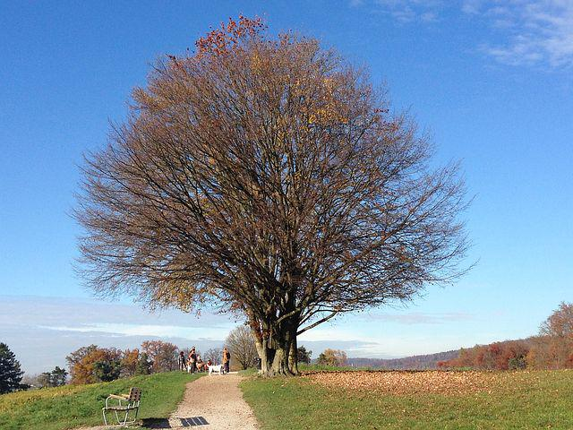 Tree, Nature, Autumn, Zollikon, Switzerland