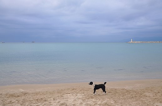 Sea, Ocean, Beach, Fishing Boat, Dog, Blue, Sky