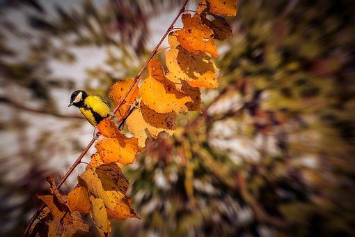 Autumn, Bird, Nature, Golden Autumn, Tree, Fall Foliage