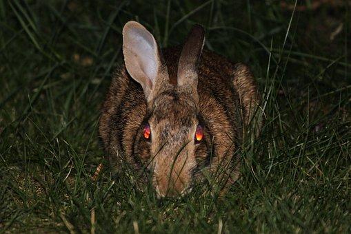 Rabbit, Bunny, Evil, Demon, Face, Death, Devil, Fear