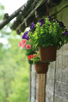 Flower Pot, Potted Plant, Flowers, Hanging, Outdoors