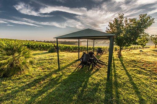 Gazebo, Tuscany, Tent, Grape, Chairs, Evening, Garden
