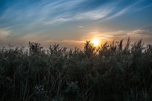 Sunrise, Sky, Wildkreuter, Landscape, Nature