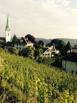 Zurich, Zollikon, Switzerland, Grapes, Church, Village