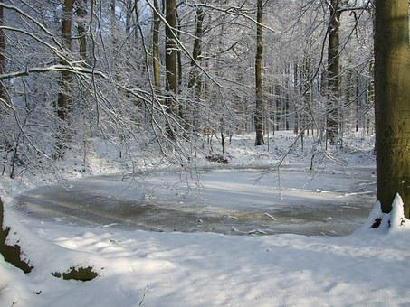 Snow, Vechtdal, Dalfsen, Winter, Forest