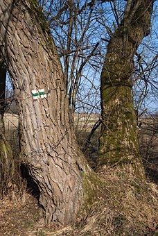 Tourist Trail, Trees, Branches, Landscape