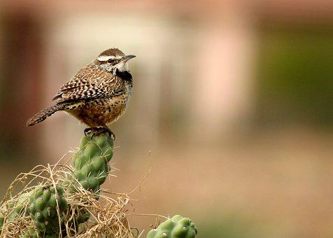 Bird, Wren, Nature, Wildlife, Animal, Small, Perch