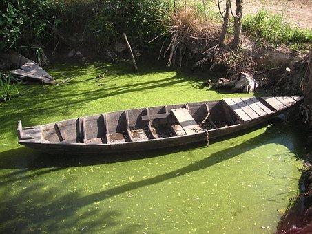 Padule, Fucecchio, Wherry, Boat, Swamp, Green, Nature